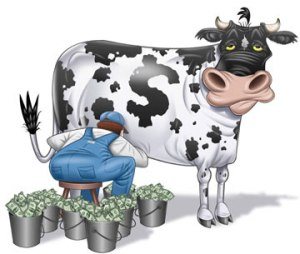 Cash Cow Calendar - raised over $200,000 in it's inaugural year.